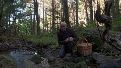 El señor de los bosques - Braojos de la Sierra (Madrid)