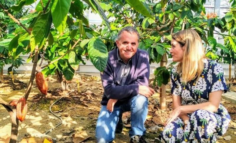 La primera plantación de cacao de Europa está en España