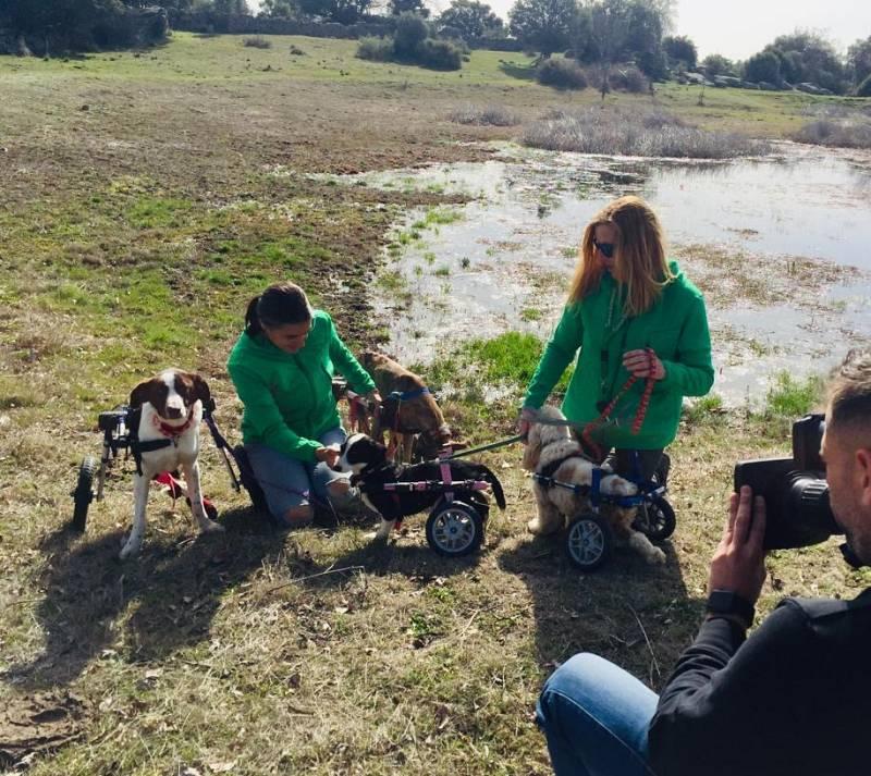 Bichos Raros acoge a animales con alguna discapacidad