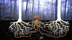 El escarabajo verde - La internet del bosque
