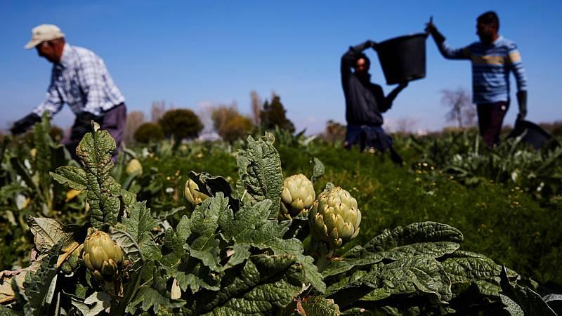 La agricultura, un sector estratégico que no cesa para garantizar el abastecimiento de alimentos