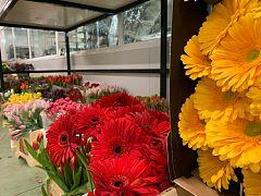 España Directo  - Flores solidarias para animar hospitales y residencias