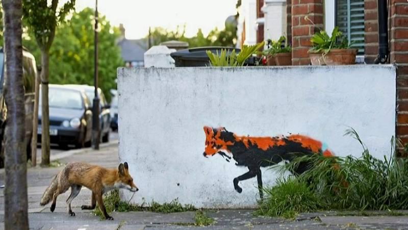 Vídeo: Los animales toman las calles vacías por el confinamiento - RTVE.es