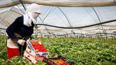 Falta mano de obra en los campos de Huelva por el coronavirus