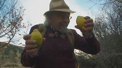 Aquí la tierra - Cómo hacer un jarabe de limón natural en casa