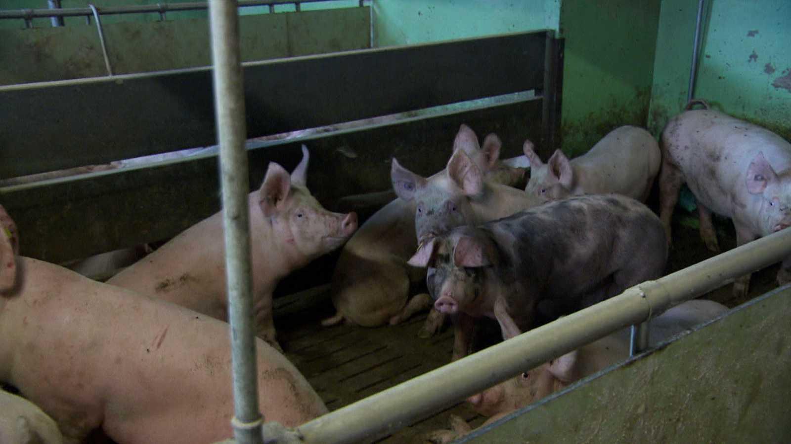 Documentos TV - El camino de la carne - Avance