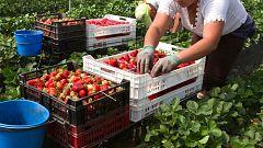Déficit de trabajadores en el sector agrícola por el coronavirus