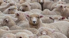 Los pastores no pueden cerrar sus negocios