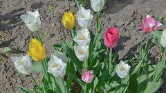 Los hospitales de Madrid reciben tulipanes con un mensaje de ánimo para sanitarios y pacientes