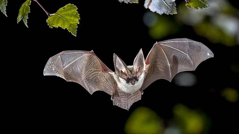 Los murciélagos, reservorio del Covid-19 según el ministerio de Sanidad