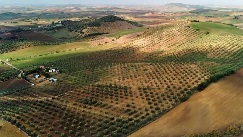 Agricultores en Sevilla: ''Si el campo no funciona, no funciona nadie''