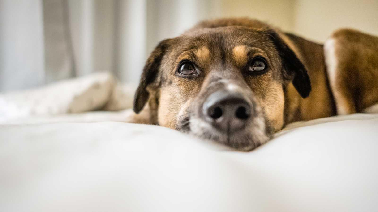 ¿Quién cuida a los animales de los más afectados por la crisis del COVID-19?
