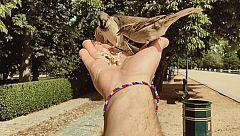 Aquí la Tierra - El gran amigo de los gorriones