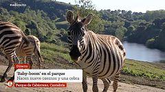 España Directo - 18/05/20