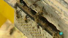 La aventura del saber. Museo de las abejas