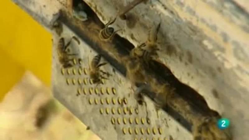 La aventura del saber. Museo de las abejas polinizacio¿n