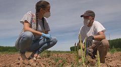 Aquí la tierra - ¿Cuánto tardan en crecer los espárragos?