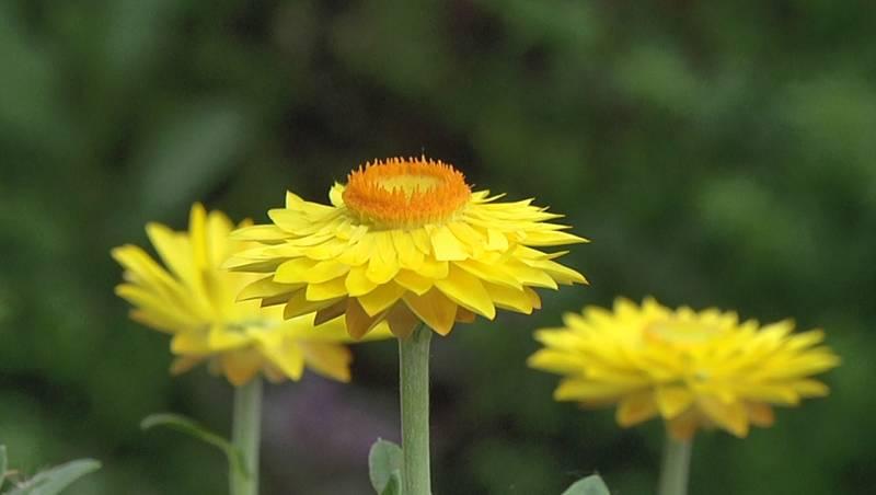 Las plantas activan nuestro sentidos