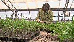 Aquí la tierra - Las hortalizas más castizas