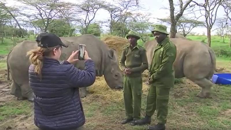 "Las reservas de animales se reinventan: ""telesafaris"" para recaudar fondos"