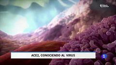 El Coronavirus trata diferente a hombres y mujeres