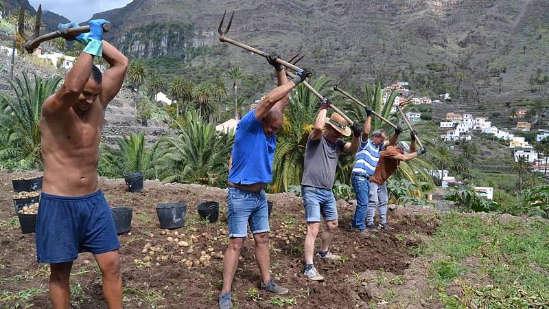 El Gobierno prorroga hasta el 30 de septiembre las medidas para facilitar la contratación de temporeros para la agricultura