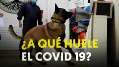 Francia entrena a perros para rastrear el COVID-19