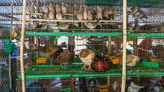 China controlará el consumo y la venta de animales salvajes