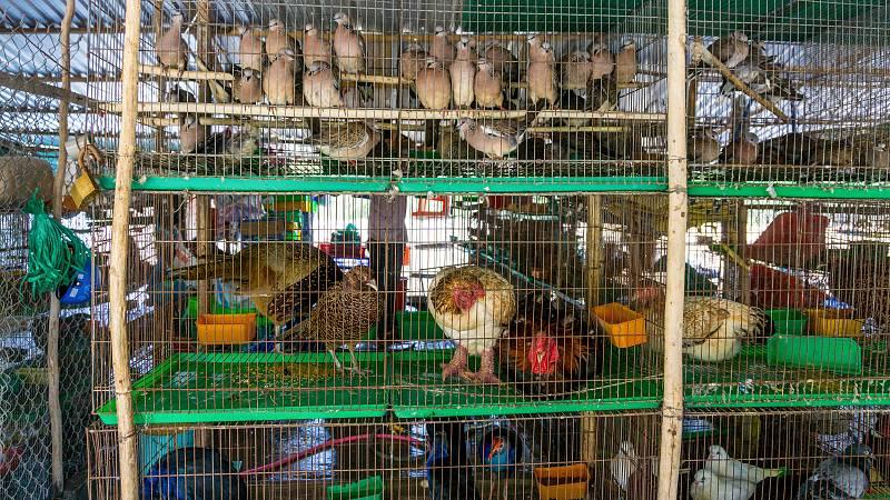 China ha inensificado los controles en los mercados y los castigos por la venta de animales salvajes, que algunas investigaciones señalan como origen de la pandemia de coronavirus. En Pekín, los ciudadanos son más conscientes ahora del riesgo de su c