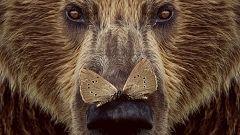 Somos Cine - Cantábrico. Los dominios del oso pardo