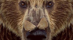 Cantábrico. Los dominios del oso pardo