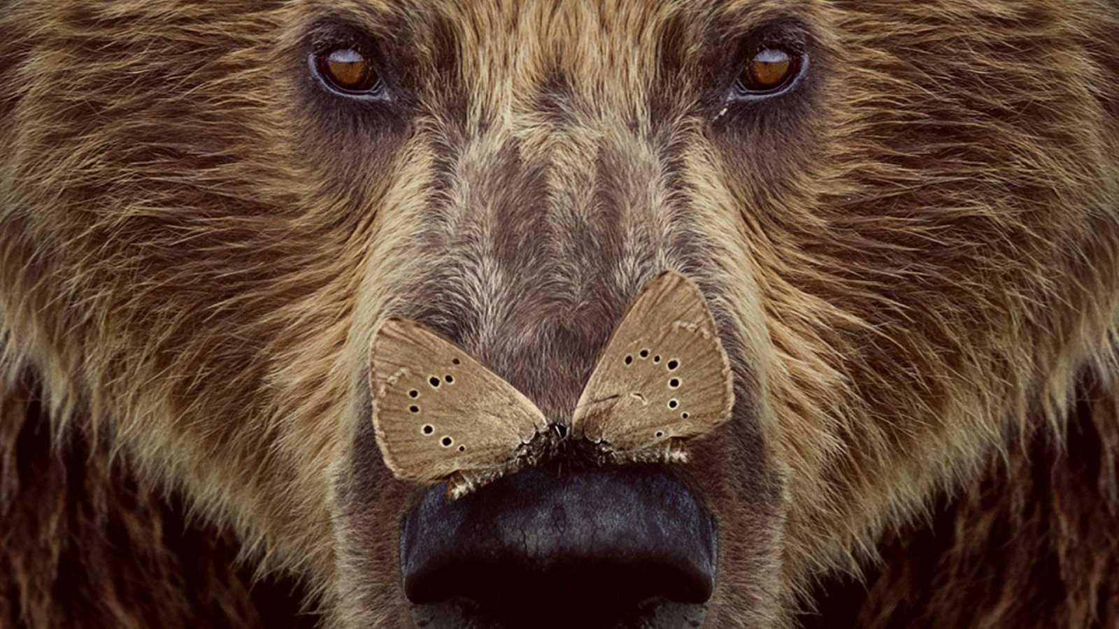 Somos Cine - Cantábrico. Los dominios del oso pardo - Ver ahora