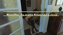 Papille, la gata francesa que sobrevió al coronavirus
