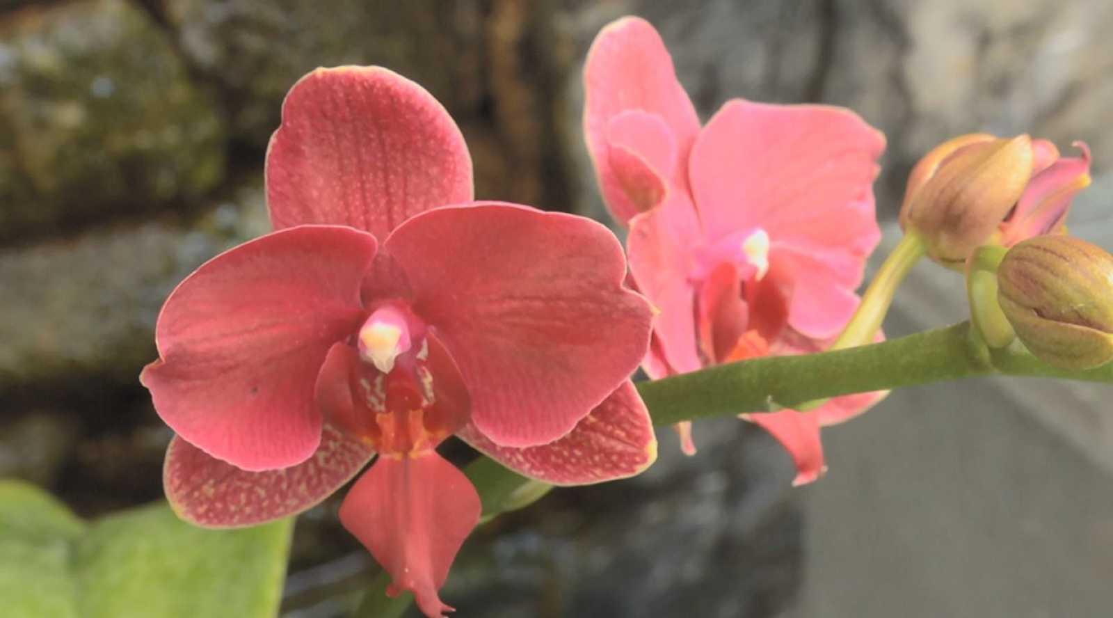 El mundo mágico de la orquídea