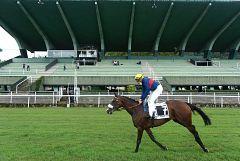 Guantes y mascarillas, la nueva realidad en las carreras de caballos