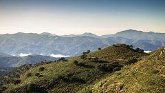 80 cm - Sierra de Grazalema