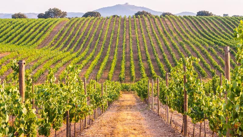 Así son las viñas de la región vitivinícola más extensa del mundo