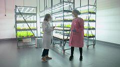 Aquí la Tierra - La agricultura del futuro: así es Ekonoke