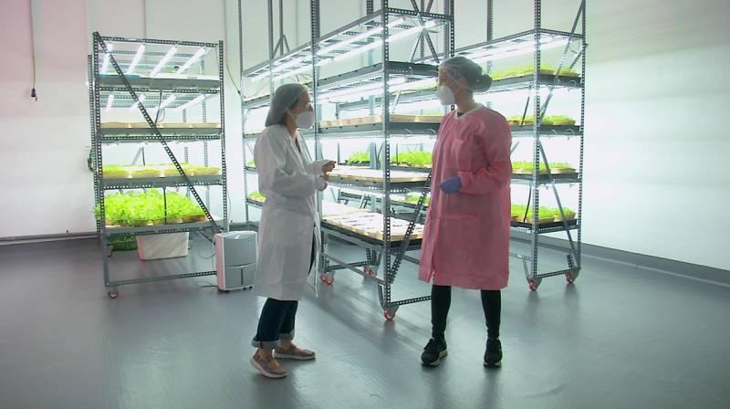 La agricultura del futuro: así es Ekonoke