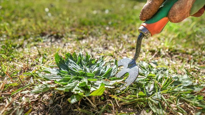 Malas hierbas... ¿o hierbas incomprendidas?