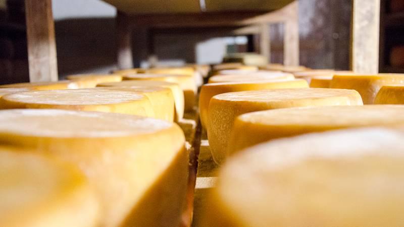 ¡Nos enseñan a hacer queso manchego!
