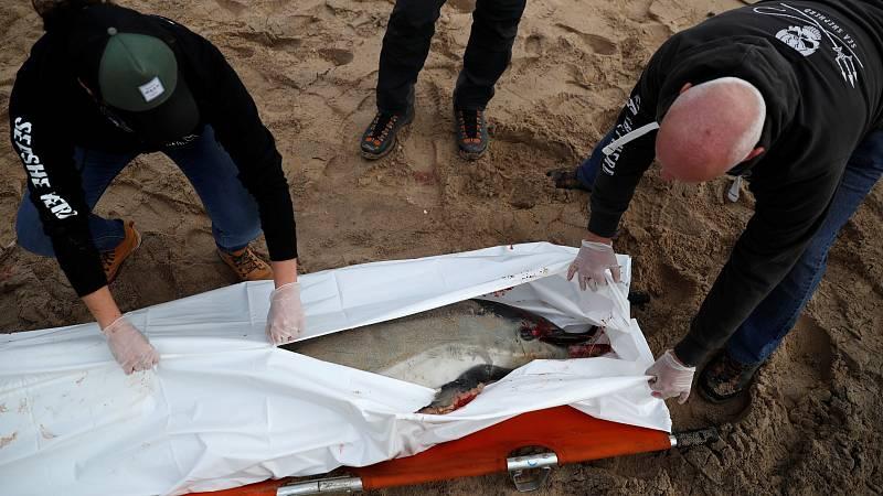 MEDIO AMBIENTE: Aparecen delfines muertos en la costa atlántica francesa