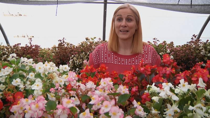 Aquí la Tierra - ¿Sabes que hay flores comestibles? ¡Te enseñamos algunas de ellas!