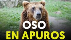 Una familia rescata a un oso de morir ahogado por los plásticos de un lago