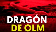 Así son los Olms, las extrañas criaturas confundidas con dragones