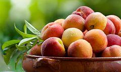 Aquí la Tierra - ¿Sabías que los melocotones y las nectarinas ayudan a nuestro sistema inmune?