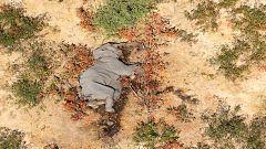 El misterio de los elefantes muertos en Botsuana