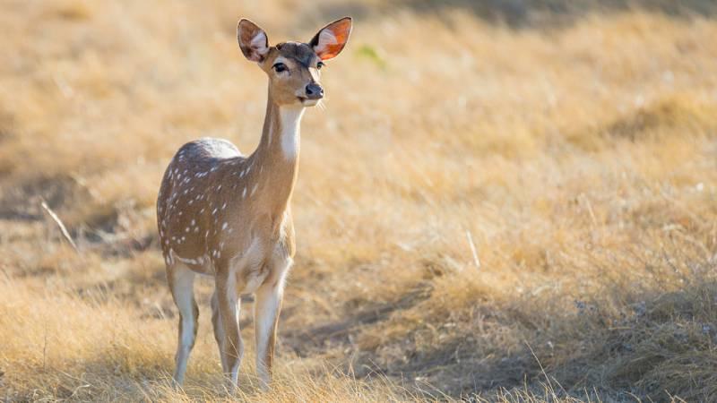 Aquí la Tierra - ¿Conoces el centro en donde cuidan ciervos, gamos y corzos de la Sierra Norte?