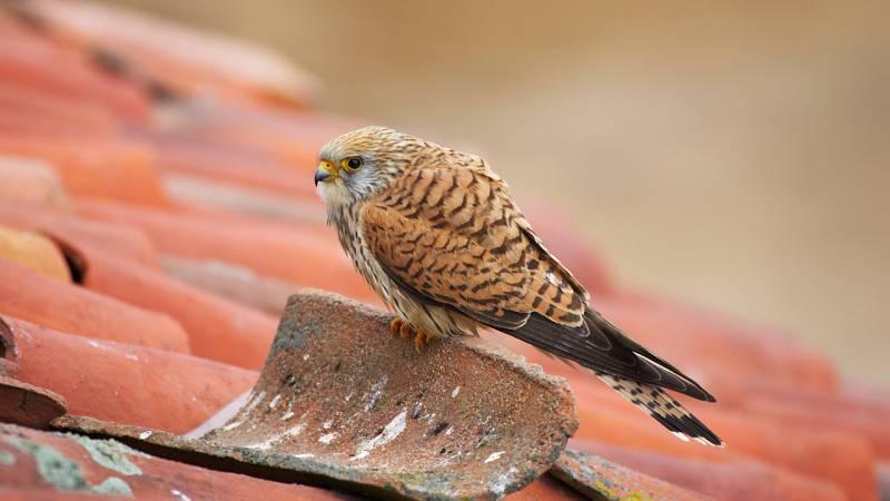 Aquí la Tierra - ONG Grefa: la recuperación y proliferación de las aves en peligro