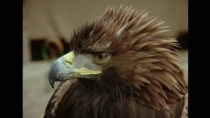 El hombre y la Tierra (Fauna ibérica) - El valle de las águilas - ver ahora